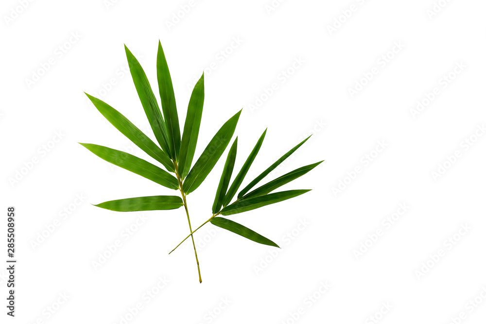 Fototapety, obrazy: bamboo leaves isolated on white background