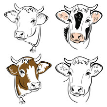 Cow Head Portrait, Set Of Stylized Vector Symbols On White Background, Farm Animal