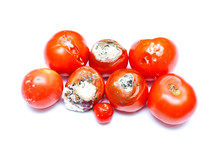 Spoiled Tomatoes  Isolated On ...