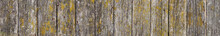 Background Of Old Weathered Wooden Boards With Old Dry Moss. Panoramic Wooden Texture.