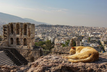 Athens, Herodes Atticus And A Cat Resting