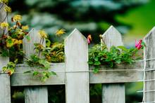 フェンスの植物