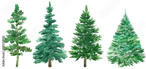 Fototapeta Watercolor Christmas green trees. Spruce and holiday tree. Hand-drawn illustration. obraz