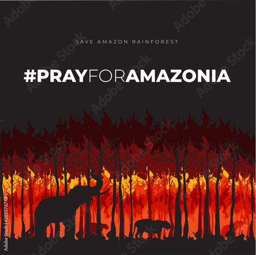 Photo Save Amazonia Forest in Brazil From Fire Disaster Vector Illustration