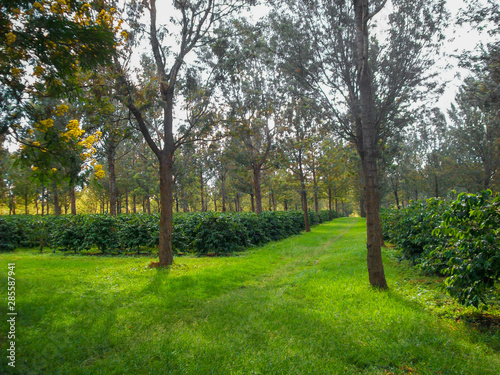 Spoed Foto op Canvas Weg in bos Pathway through trees, green farms