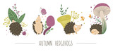 Vector set of scenes with hand drawn flat hedgehogs. Funny autumn pictures with prickly animal. Cute woodland animalistic illustration for children's design, print, stationery.