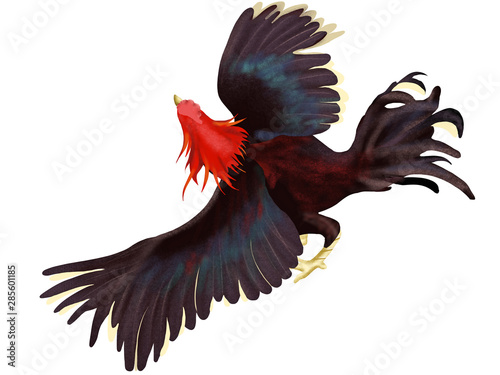 Drawing of fighting cock thai chicken or gamecock with chartoon style Fotobehang