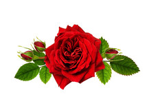 Red Rose Flowers In A Floral A...