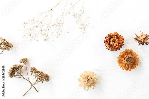 Cuadros en Lienzo Dry floral branch and buds on white background