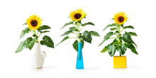 Sunflower In Vase Collection