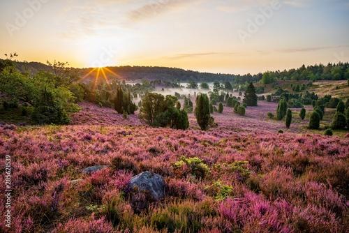 Sonnenaufgang am Totengrund in der Lüneburger Heide Fototapeta