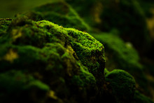 Beautiful Green Moss On The Fl...