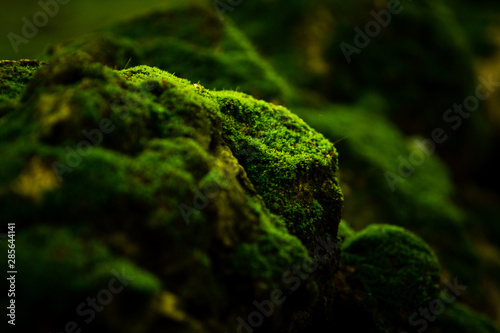 Fototapeta Beautiful green moss on the floor wallpaper background.