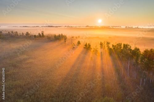 Valokuva  Foggy sunrise at a swamp