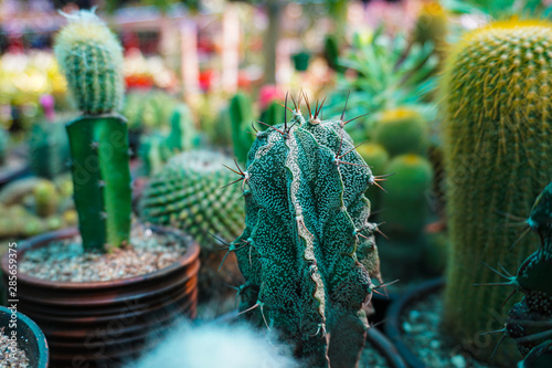 Photo A Cactus (plural Cacti) is a block that spawns naturally in Desert biomes and Mesa biomes