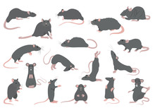 Different Rats Collection. Rat...