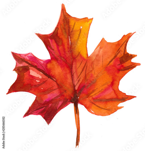 Fotografie, Obraz  Autumn maple leaf. Watercolor illustration