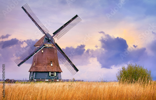 Obraz Volendam, Netherlands. Traditional Holland landscape with typical dutch windmill and yellow grass field, evening sunset sky in countryside. - fototapety do salonu