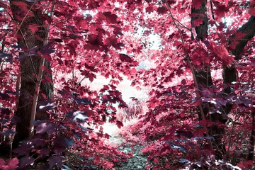 Fototapeta Las Beautiful infrared shots of pink and purple forest landscapes