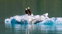 Eagles On Ice: A Bald Eagle Couple Perched On An Iceberg In An Alaskan Fiord
