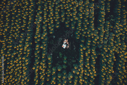 Slika na platnu Field with blooming sunflowers aerial view, agrarian in rural areas