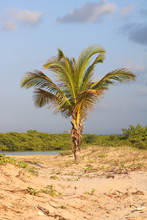 Palm Tree And Dunes
