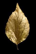 Autumn Composition Of Different Golden Leaves And Letters On Black Background