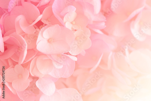 Poster Hydrangea Hydrangea with soft pastel color in blur style for background