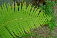 A Large Green Leaf On A Stalk ...