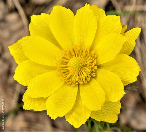 Photo Yellow flower spring