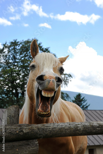Foto op Canvas Paarden Funny portrait of a brown horse against the background of the summer sky in the educational farm. Pet therapy concept.