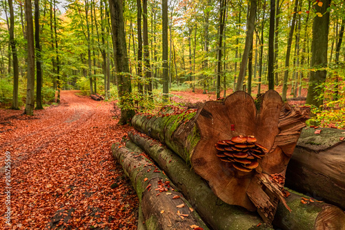 Poster de jardin Brique Colorful autumn in the sunny forest, Europe