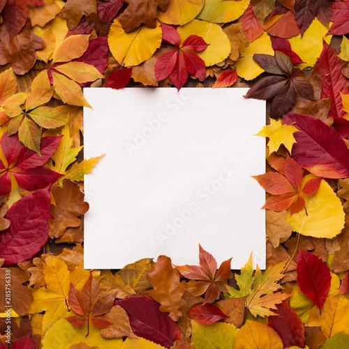 Bright and colorful autumn frame of fallen leaves Tapéta, Fotótapéta