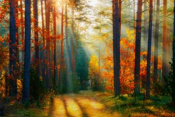 Panel Szklany Podświetlane Do biura Autumn forest landscape