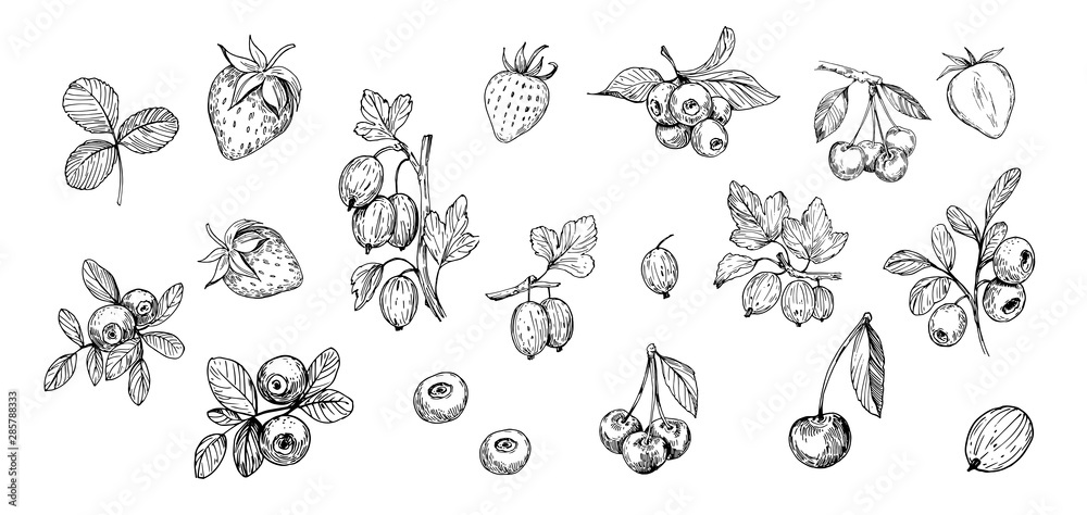 Fototapety, obrazy: Set of outlines  berries. Hand drawn illustration converted to vector