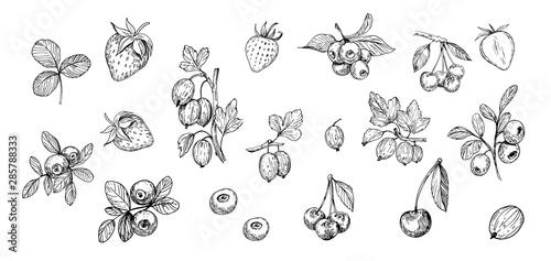 Fototapeta  Set of outlines  berries