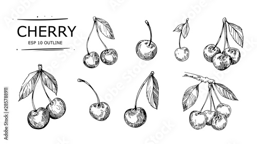 Fotografiet Sketch of cherry. Hand drawn vector