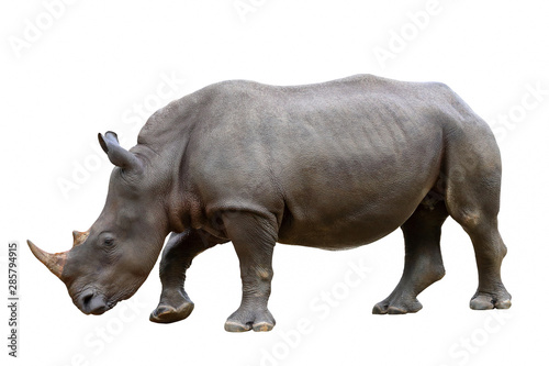 Spoed Foto op Canvas Neushoorn Rhinoceros isolated on white background.