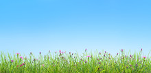 Spring Grass And Pink Flowers Natural Background