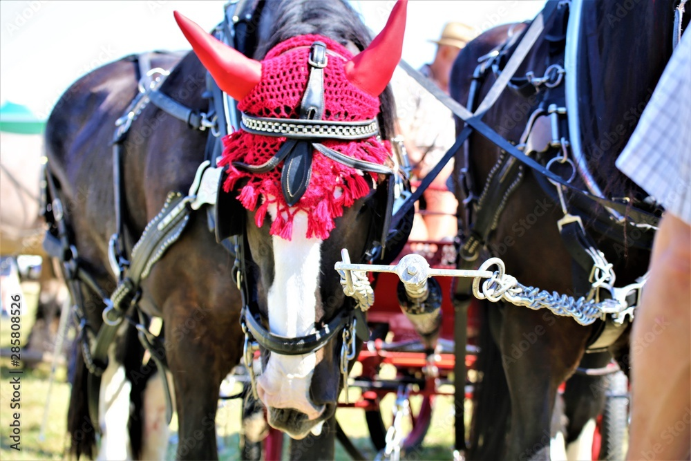 Fototapeta horses in a stable