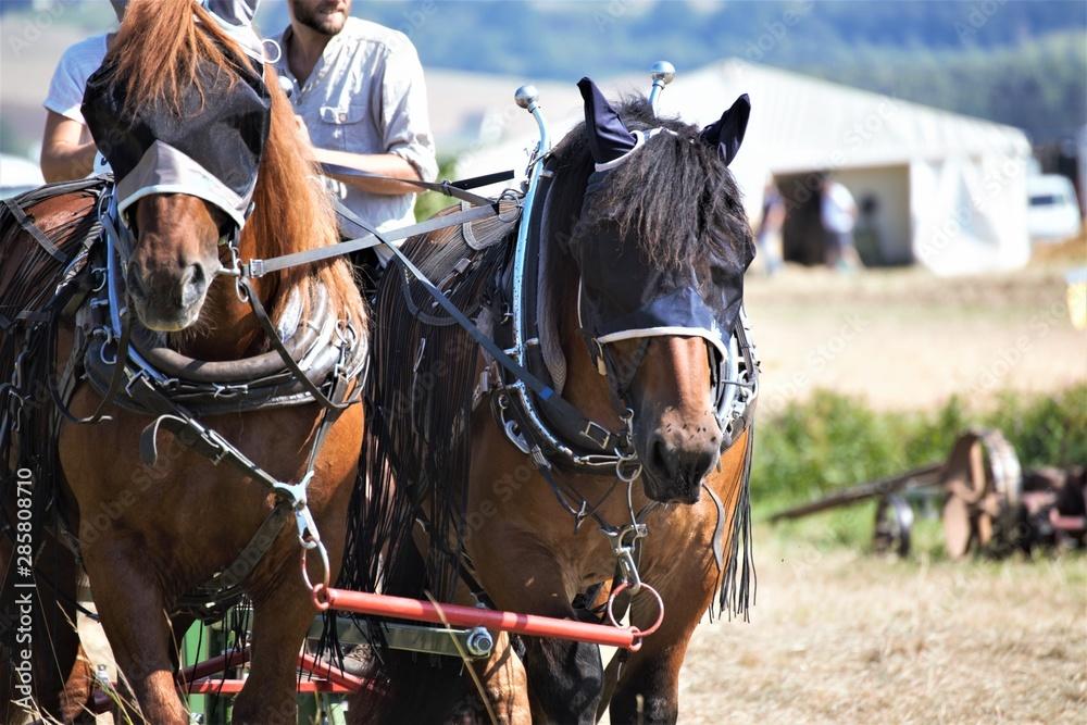 Fototapeta horse and carriage
