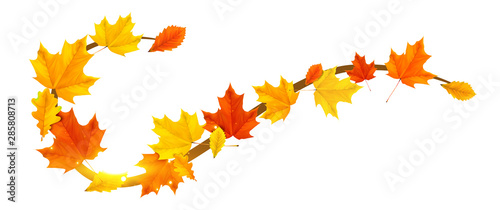 Obraz autumn border element with colored leaves - fototapety do salonu