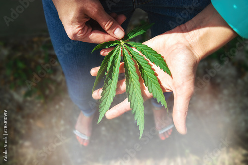 Green leaf of marijuana in a hand. Conceptual photo Wallpaper Mural