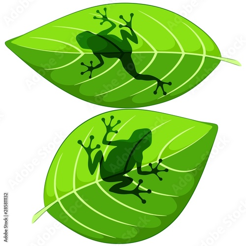 Ingelijste posters Draw Frog shapes on Green Leaves Vector illustrations isolated on white