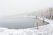First Snow In The Autumn Forest. Kidelu Lake In Altai Mountains, Siberia, Russia.
