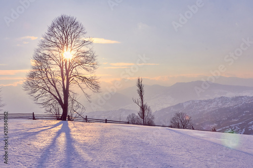 Poster Taupe winter landscape sunrise in the snowy mountains and a tree on a slope