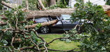 Tree Falls And Crushes A Car That Was In The Driveway