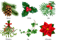 Plants, Christmas Decorations. Spruce, Holly, Yew, Mistletoe, Ivy, Poinsettia. 3d Realistic Vector Set
