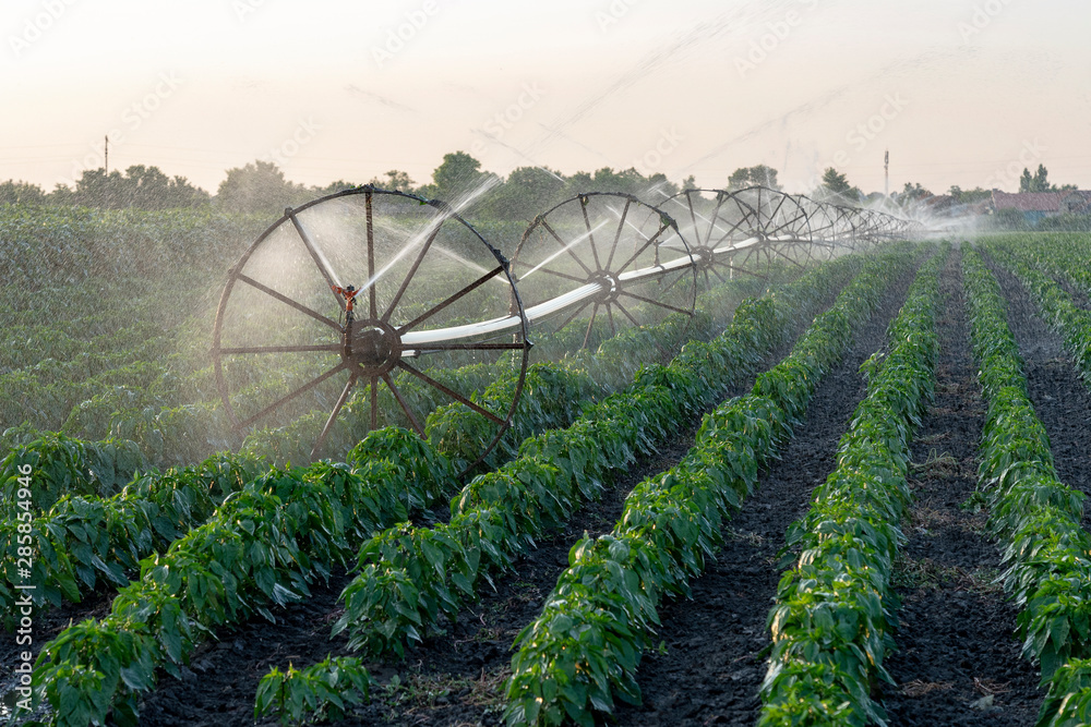 Fototapety, obrazy: Irrigation System Watering Crops on Farm Field