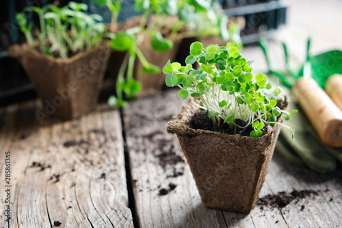 Carta da parati  Green growing seedlings of garden plants, shovel, rake and gloves